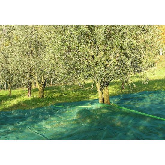 Ελαιόδιχτα  Ιταλίας οικολογικά  Padano Messini (πλάτος 8m -μήκος 14m)